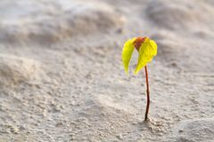 Life. Small Rostock of a tree in desert royalty free stock image