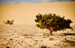 Life against desert. Small plant on the sea of sands. Royalty Free Stock Photo