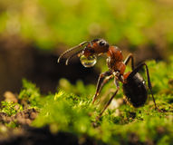 The life of ants Stock Photography