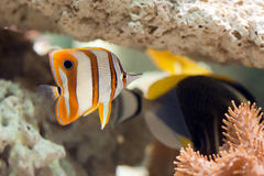 Life in aquarium Royalty Free Stock Image