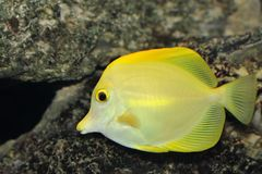 Life in an aquarium Stock Image