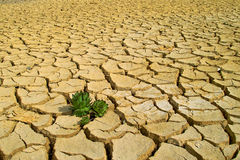 Life in the arid soil Stock Photo