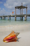Life is a Beach (Conch). One of a large series. Tropical conch on the beach with an old wooden jetty in the background Stock Images