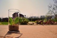 Life in beaker Royalty Free Stock Image
