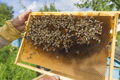 Life of bees. Worker bees. The bees bring honey. Day stock photography