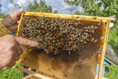 Life of bees. Worker bees. The bees bring honey. Day stock photo