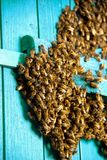 Life of bees. Worker bees. The bees bring honey. Life of bees. Worker bees. The bees bring honey stock image