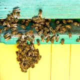 Life of bees. Worker bees. The bees bring honey. Life of bees. Worker bees. The bees bring honey stock photos