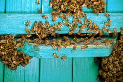 Life of bees. Worker bees. The bees bring honey. Life of bees. Worker bees. The bees bring honey stock photo