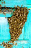 Life of bees. Worker bees. The bees bring honey. Life of bees. Worker bees. The bees bring honey stock images
