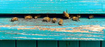 Life of bees. Worker bees. The bees bring honey. Life of bees. Worker bees. The bees bring honey royalty free stock images