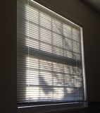 Life Beyond the Blinds. Morning sun birds Stock Photos