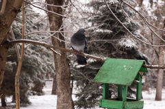 Life birds in winter Stock Photography