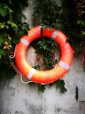 A life buoy being covered with green plant Stock Photo