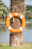 Life buoy hanging on tree nearby the lake, for safety and Royalty Free Stock Photography