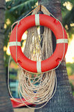 Life Buoy on palm tree Royalty Free Stock Images