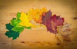 Life circle of a leaf Stock Photos