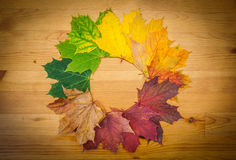 Life circle of a leaf. Autumn colors, nature Royalty Free Stock Photography