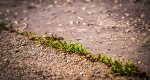 Life in a concrete. Life will always find its way Royalty Free Stock Photography
