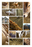Life at the countryside Stock Photography