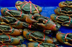 Life crab selling in the market Stock Photography