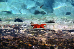 Life in the crystal clear sea Stock Photography