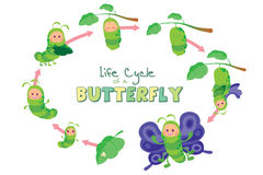 Life cycle of a butterfly. Artwork representing the life cycle of a butterfly from egg to adult Stock Photo