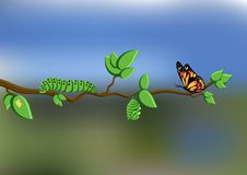 Life cycle of butterfly with eggs, caterpillar, pupa, butterfly on tree branch on natural background vector illustration