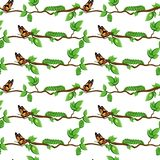 Life cycle of butterfly, metamorphosis seamless pattern. Butterfly, eggs, pupa, caterpillar on tree branch and leaves isolated on white background. Cartoon stock illustration