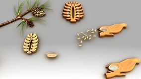Life Cycle of a Conifer. Pine trees are conifers cone bearing and carry both male and female sporophylls on the same mature sporophyte Stock Photo