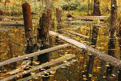 Life cycle in the forest ecosystem. Abandoned, flooded forest Royalty Free Stock Images
