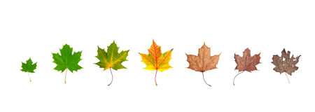 Life cycle of leaf Royalty Free Stock Photos