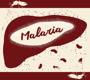Life Cycle of Malarian Plasmodium in Human Body, Vector Illustration Royalty Free Stock Photography