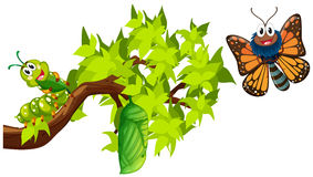 Life cycle of monarch butterfly. Illustration Royalty Free Stock Photo