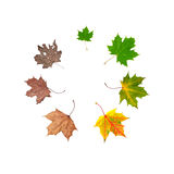 Life Cycle Of Leaf Royalty Free Stock Images