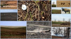 Life cycle of the prairie set of 11 images Royalty Free Stock Photography