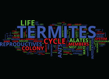 Life Cycle Of Termites Text Background  Word Cloud Concept Stock Photos