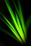 Life in Darkness. Stripes of electric green light, concept of growing plant in darkness Royalty Free Stock Photo
