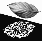 Before and after. The life and death. Black and white image concept collage from leaves Stock Image
