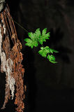 Life and death. Green leaf, power of life Royalty Free Stock Photography