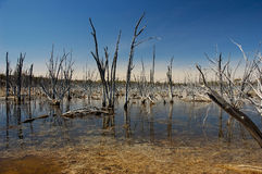 Life after death. Dead trees in the shallow lake stock photography