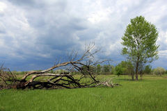 Life and death. Two trees on meadow Stock Photos
