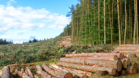 Life and Death contrast - Cut down trees next to living forest Stock Photos