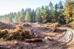 Life and Death contrast - Cut down trees next to living forest. Pine of cut down trees with a tree lined living forest in the background - Life and Death stock photo