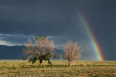 Life and Death - Rainbow Landscape Stock Photography