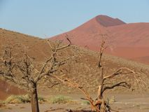 Life and death at Sossusvlei: contrasts stock photo