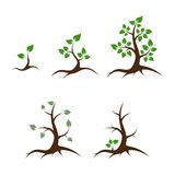 Life and death vector illustration. Life of the tree - shoot, young plant, big tree, old tree and death - vector illustration stock illustration