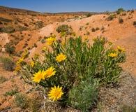 Life in the desert Stock Photos