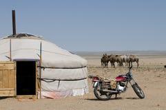 Life In Desert Stock Photos