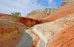 Life in the desert. aktau desert. north tien shan Royalty Free Stock Image